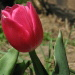 BetterPhoto Member Since: 3/23/2006
