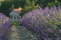 A Home Among the Lavender Fields - Smaller F-number = Smaller Depth of Field
