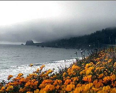Yellow flowers/Foggy coast