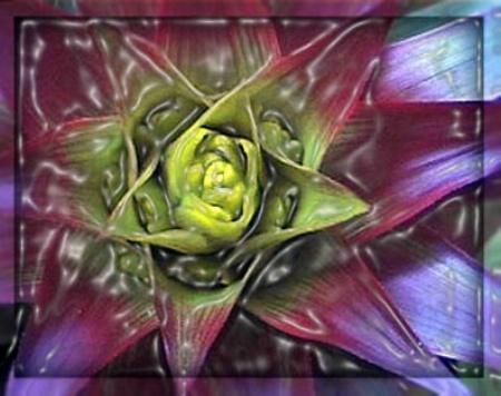 Bromeliad in Plastic