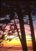 Pacific Silhouett...