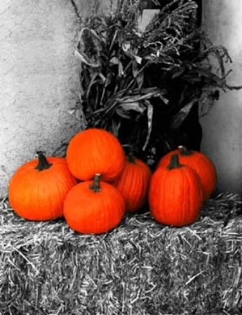 Pumpkin Festival, Dewey, AZ
