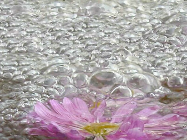 Flower Bubbles