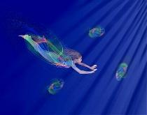 Jellyfish Fantasy