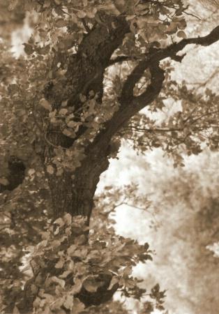 Fairy Tree 2