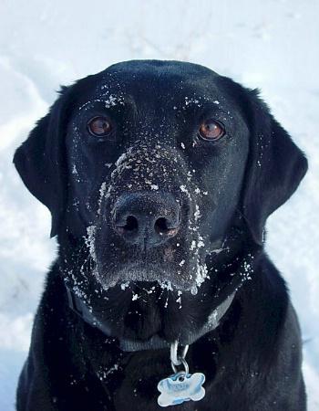 Snowface Booty