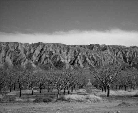 Dormant Orchard