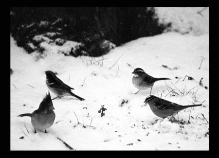 Little Winter Birds Having Dinner