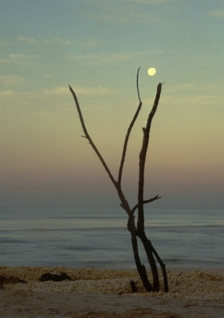sanibel moon