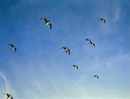 Flight Formation