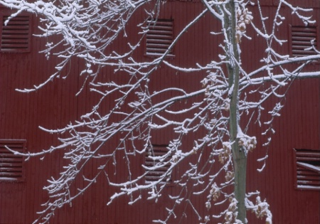 snowy_tree_barn.tif