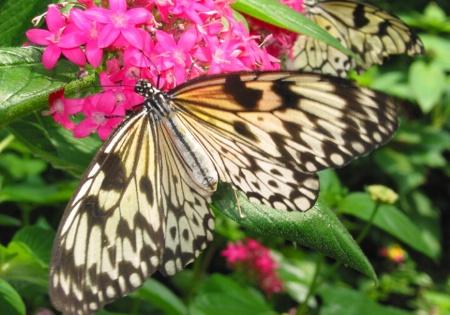 Butterfly #5