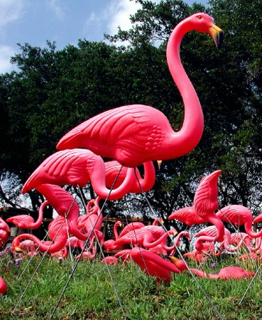 Flamingo Stampede