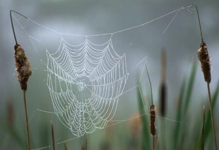 Web_small.tif
