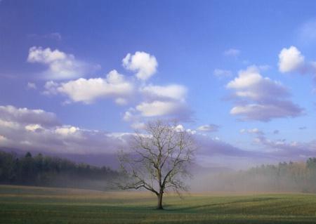 Cades_Tree.tif