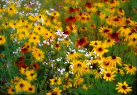 Spring_flowers.tif