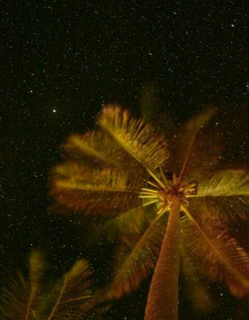 Stars and Palm