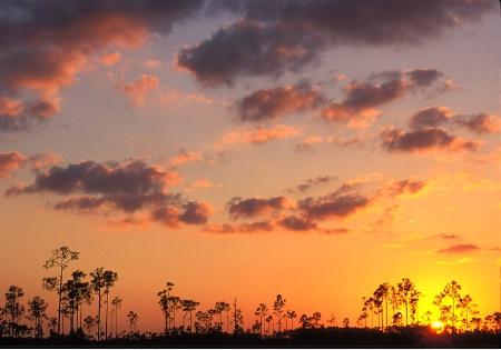 Everglades_warm.tif