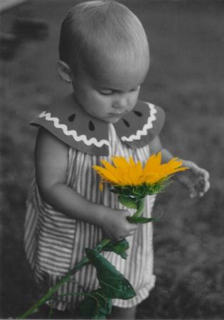 The Sunflower 2