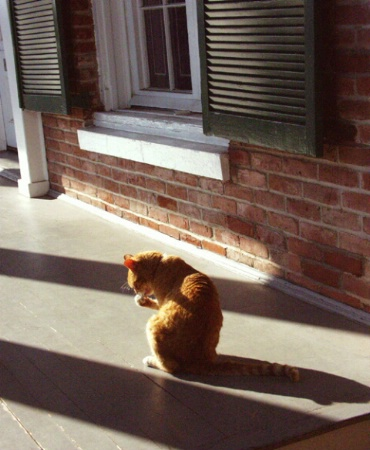 Cat on a Hot Wood Porch