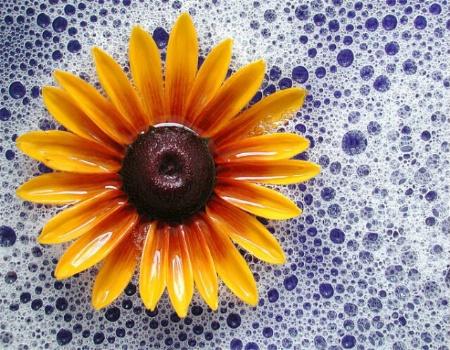 Flower in Bubbles