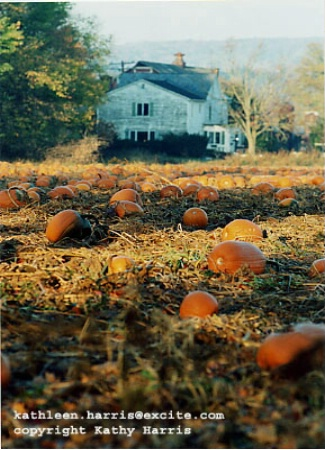 The pumpkin field