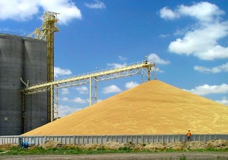 Kansas Gold