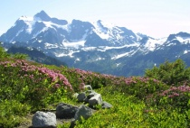 Mt Shuksan and Flowers