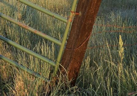 Fence & Grass
