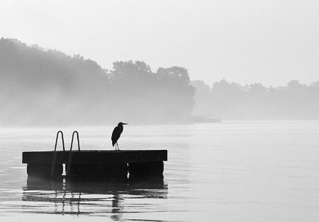 Fog Sentry