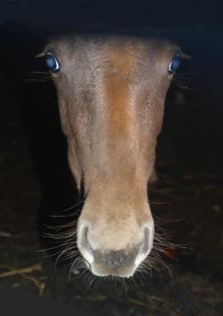 curious blue eyes