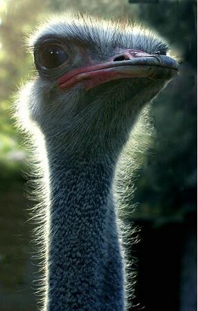 """""""big bird"""""""