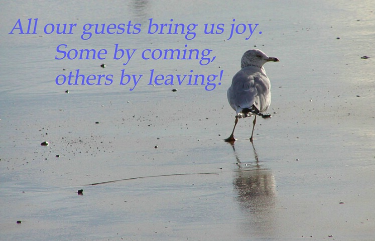 Joy of Guests