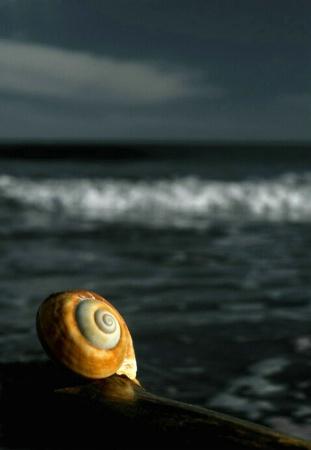 Stonehaven Shell
