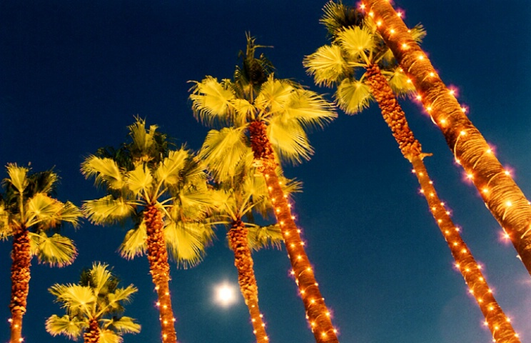 Twilight Palms