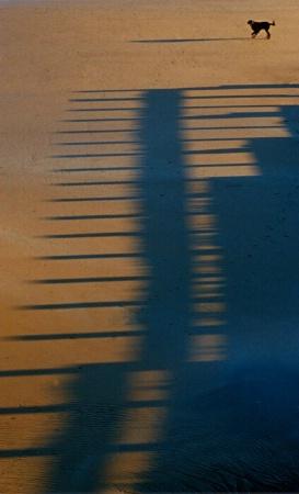 Dog Shadow