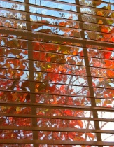 Window on Fall
