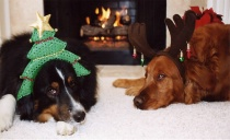 A Doggone Christm...
