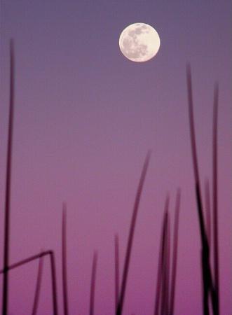 Reeds Between