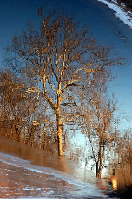 Reflecting On Winter.