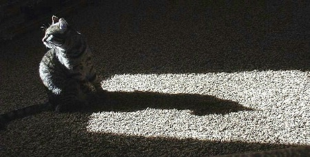 Kitty Cat Shadow