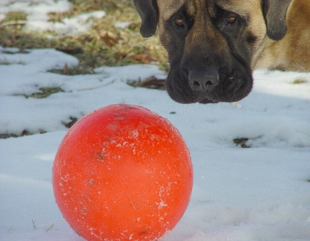 Eyes on the Ball