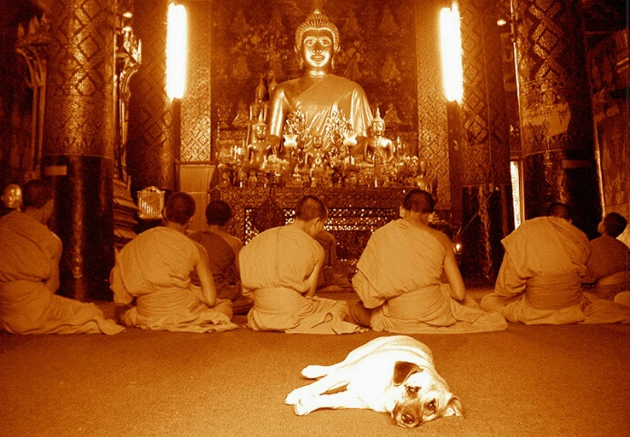 Dogs can be Buddhists too.