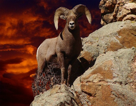 A Bighorn Sky Of Dreams