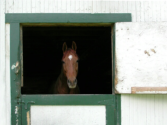 Shy in the Stable