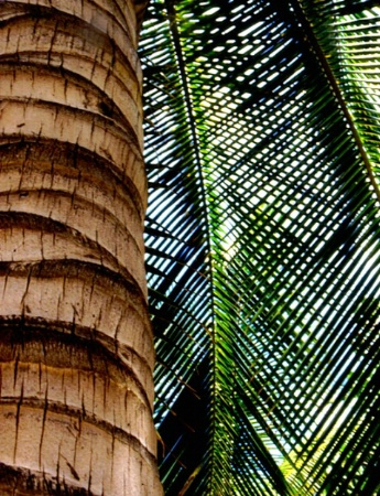 Palm Artistree