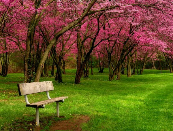 Sitting in Springtime