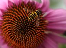 Spike Bee