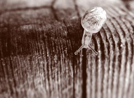 Tiny Tiny Snail