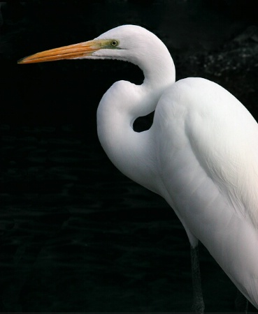 Egret's Elegance